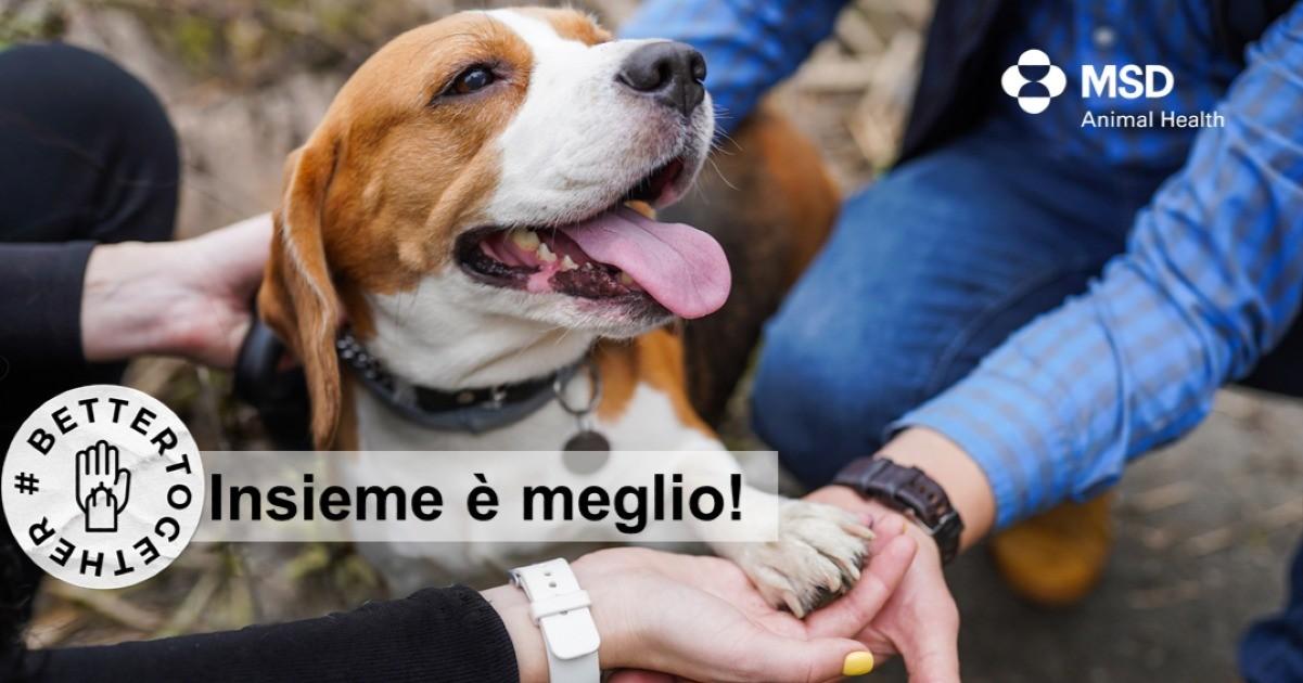 #BetterTogether: insieme è meglio-MSD Animal Health