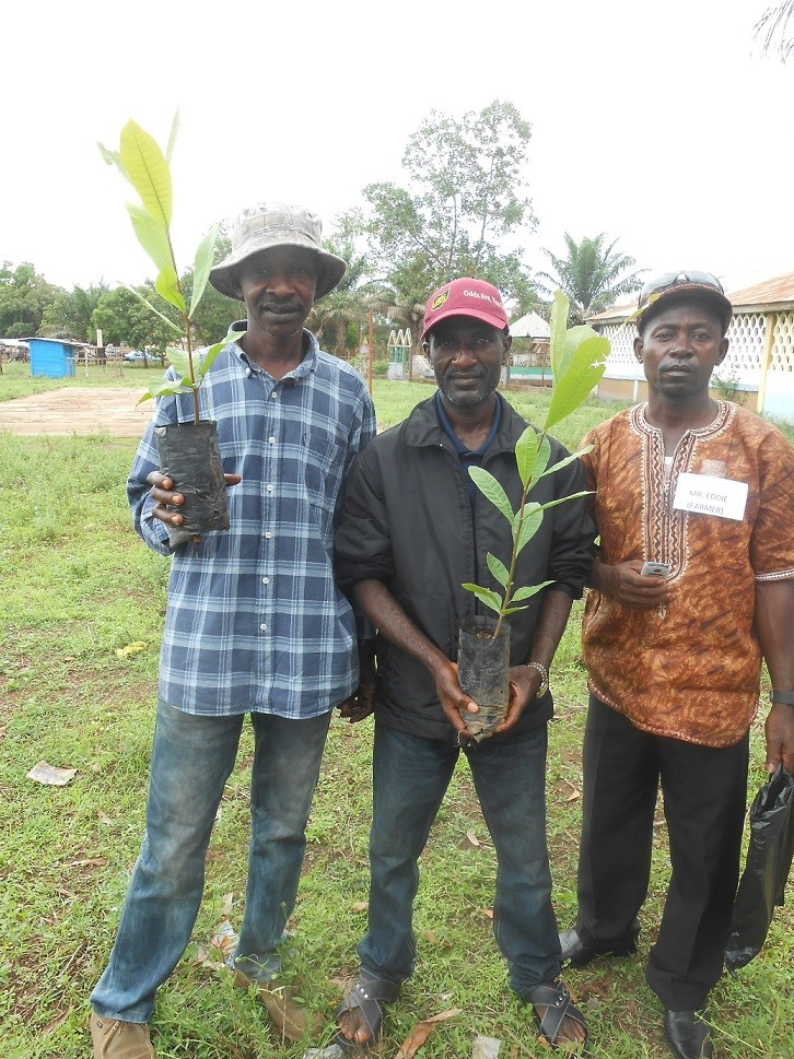 Alimamy Kamara e i suoi aiutanti con le prime nuove piante di anacardio per il loro campo