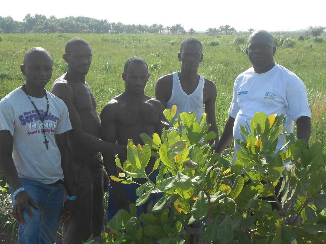 Almami Karbo e i suoi fratelli contadini nella nuova piantagione che stanno avviando con il sostegno di COOPI