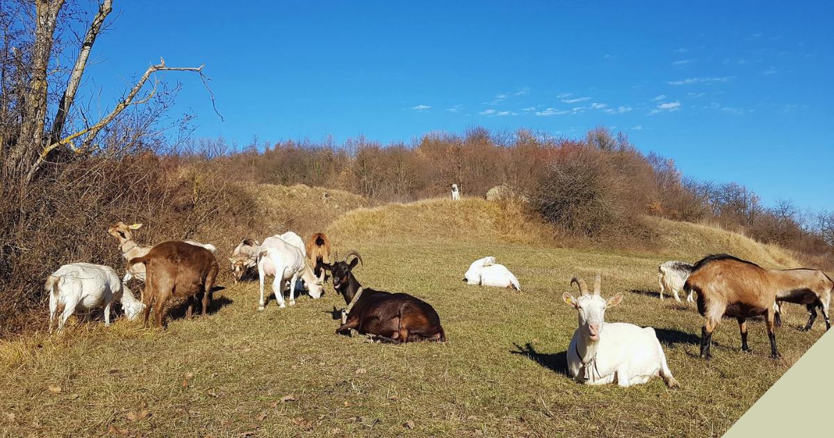 Per la Rinascita Pastorale di Paraloup-Fondazione Nuto Revelli