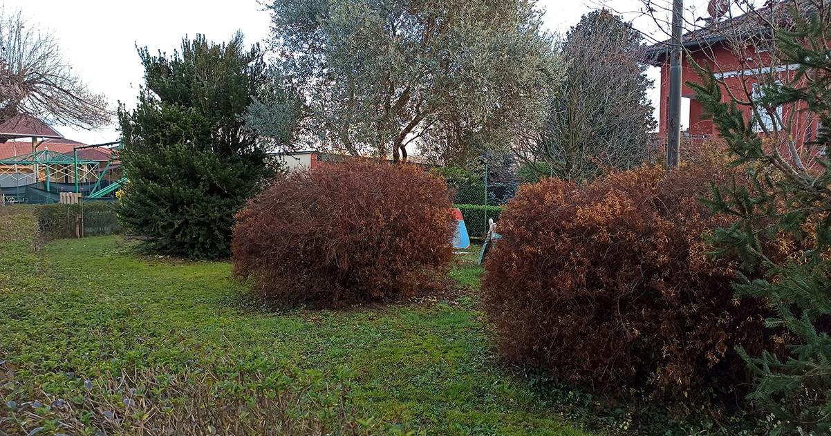 Il Giardino dei Piccoli-ROTARY CLUB VALLE MOSSO
