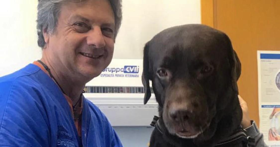 Cane donatore, amici di sangue-Confido in Brugherio