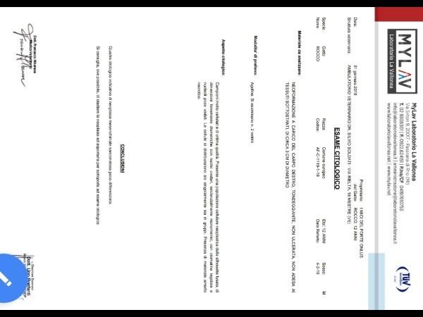SALVIAMO ROCCO-Associazione I Mici del Forte